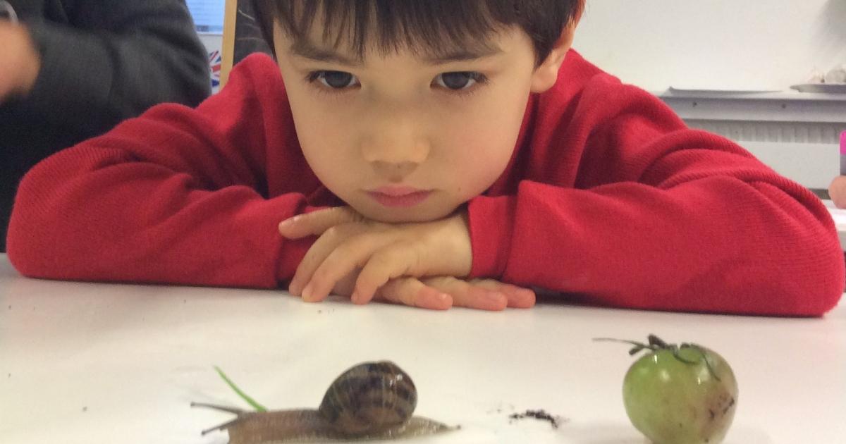 Photo d'élève observant un escargot